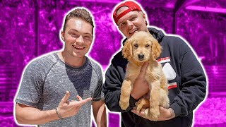 Puppy Name Reveal