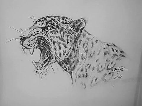 Hoe teken je een grommende jaguar dieren tekenen 24 for Tekenen 3d