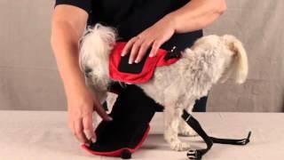 How To Use Sammy Doo Pet Diaper Wraps