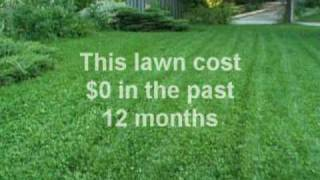 Organic & Emissions Free Lawn