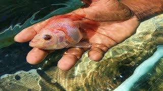 encuentro-un-pez-con-deformacin-y-decid-mostrrselo