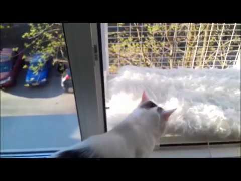 видео: Кошачий съёмный балкончик - разработка компании