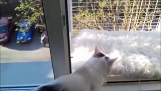 Кошачий съёмный балкончик - разработка компании