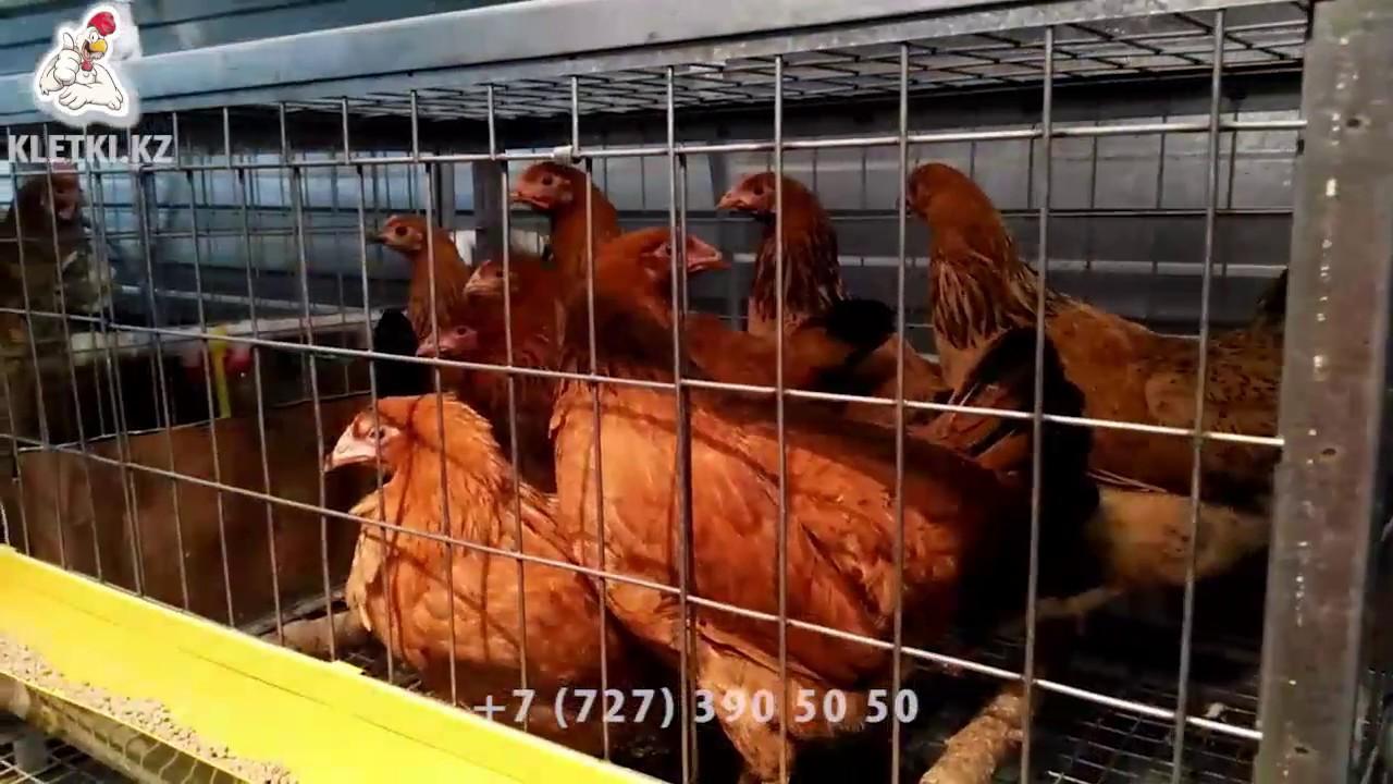На доске объявлений olx. Kz легко и быстро можно купить птенца. Покупай птичек на олх!. Алматы, алатауский район. Вчера 12:26. В избранные.
