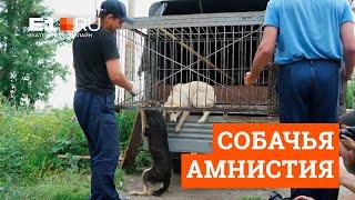 В Екатеринбурге выпустили бродячих собак на волю
