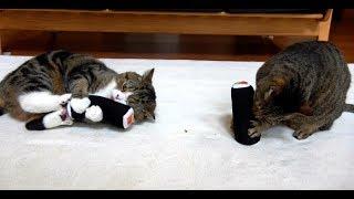 太巻きとねこ2。-Sushi rolls and Maru&Hana 2.-