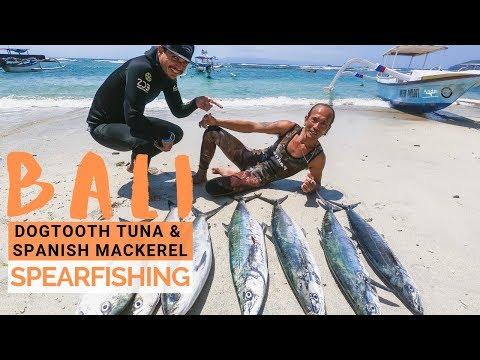 Bali Spearfishing: Dogtooth And Spanish Mackerel Season