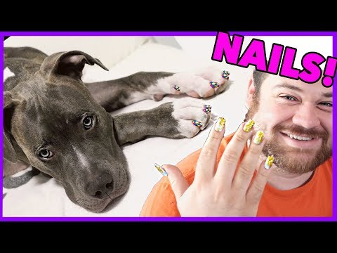 Doing My Dog's Nails!