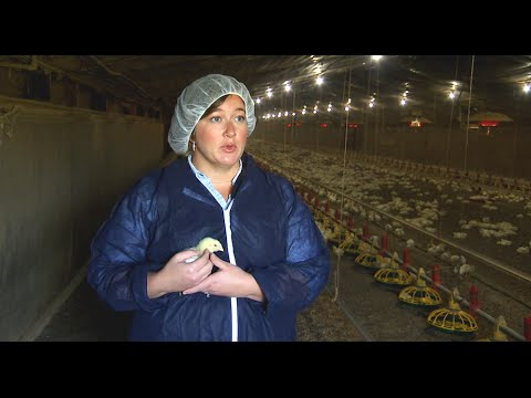 Biosecurity and Health Management on Chicken Farms