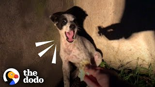 Rescuer Shares Her Lasagna With Crying Little Puppy | The Dodo