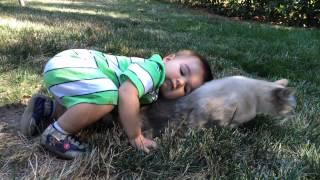 Patient cat endures toddler's affection