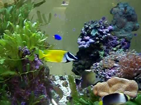 aquarium d eau de mer