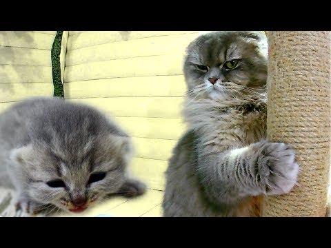 Вопрос: Как вы избавляетесь от ненужного окота вашей кошки?