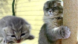 ЧТО СЛУЧИЛОСЬ С КОШКОЙ ПОСЛЕ РОДОВ? Новорожденные котята четвертый день