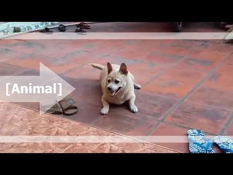 Cún Cưng Siêu Cute Nhà Ngoại ^^
