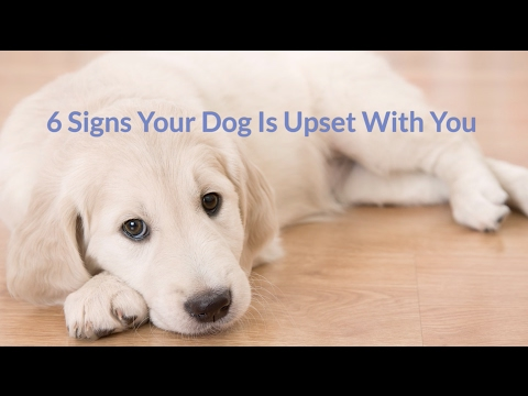 6 Signs Your Dog is Mad At You - Cuteness.com