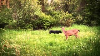 Android - видео о дружбе различных животных