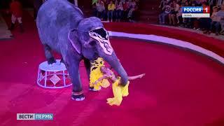 Цирк Заключительное шоу индийских слонов 12 10 17
