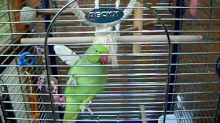 Bain de soleil pour mes oiseaux!