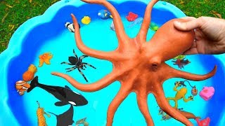 �������� ���� Learn Sea Animal and Wild Zoo Animals Names Learn Colors Video Toys For Kids ������