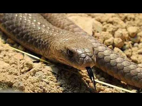 how to get snake venom out