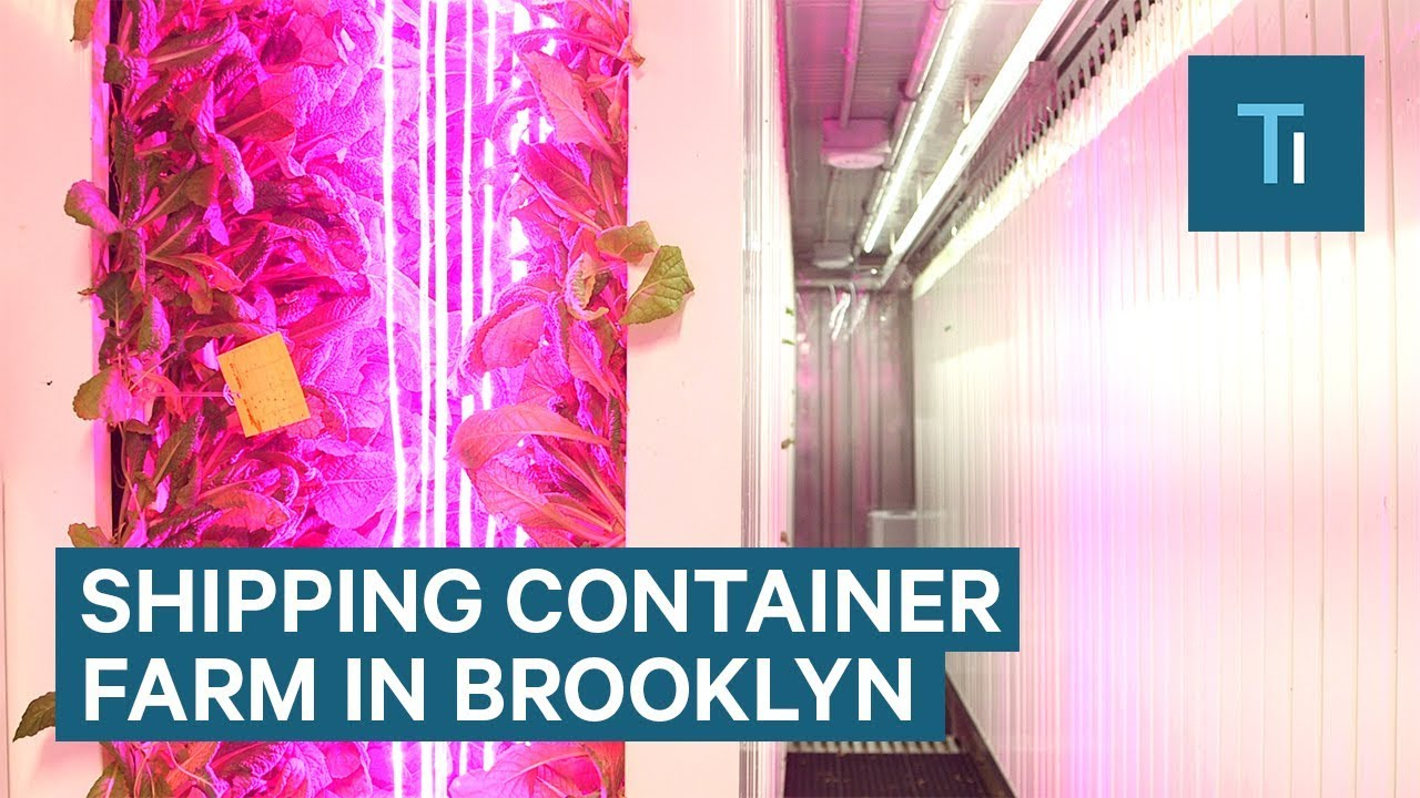 Elon Musk S Brother Opened A Shipping Container Farm In Brooklyn Youtube