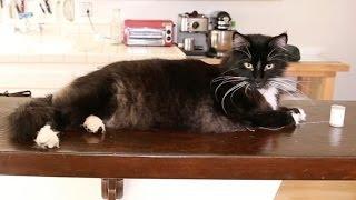 Cat Named Pizza Loves String, Hates Everything Else