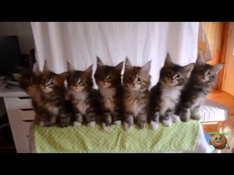 رقصة القطط / فيديو مضحك – Cat dance / funny video
