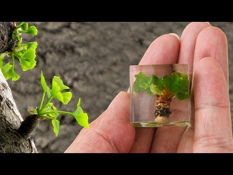 How To Make Mini Ginkgo tree From Resin | Amazing DIY