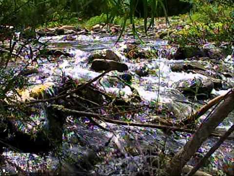 convivio en el rio Pantepec Puebla por video Tauro Isidro