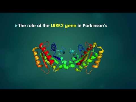 The LRRK2 gene and Parkinson's Disease