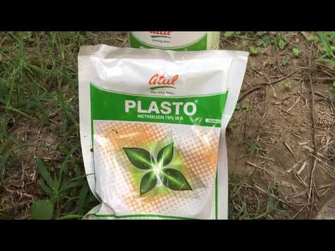 Best herbicide for sugarcane