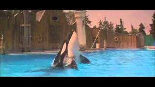 Free Willy: Jesse Bonds with Willy thumbnail