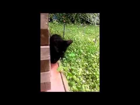 """CUTE KITTEN - KAWAII LITTLE CAT  singing FROZEN """"DO YOU WANT TO BUILD A SNOWMAN"""""""