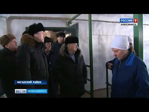 Зерновой кластер планируют создать в Баганском районе Новосибирской области