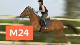 Смотреть видео Британская журналистка укротила коня в прямом эфире - Москва 24 онлайн