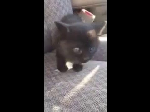 Happy rescued kitten | RedRover Responders rescuing cats with Core Creek Park Collaboration