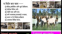 Shelipalan - Goat farming - शेळीपालन (Marathi)  M.S.Patil-sheli palan helpline - 9730607617
