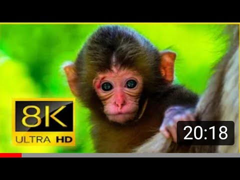 Download Ultimate Wild Animals Collection in 8K ULTRA HD / 8K TV, NATURE.🤯🤪🤬