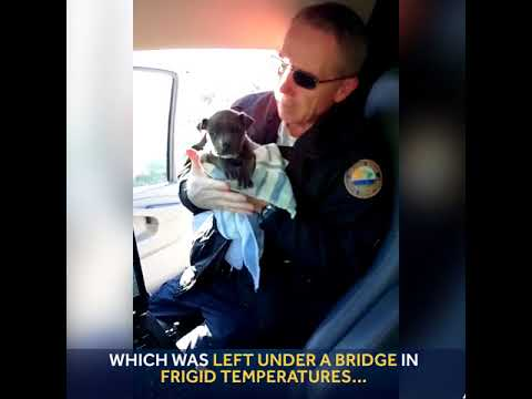 Puppy rescued then adopted by Daytona Beach officer