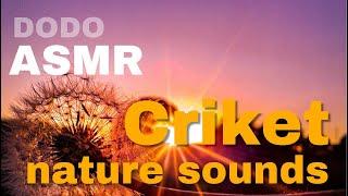 ASMR criket nature sounds 10hours black screen - 검은화면 귀뚜라미소리 10시간 블랙스크린 잠잘오는 소리