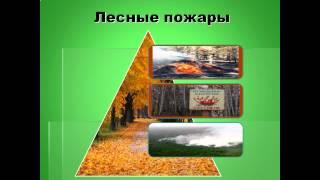 Значение леса 3 класс УМК ПНШ   презентация по Окружающему миру
