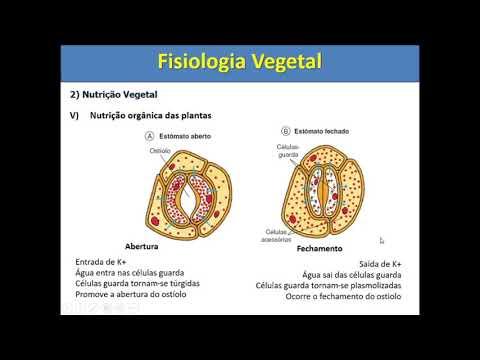 fisiologia-vegetal