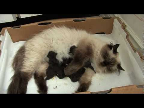 Mischa's Newborn Kittens: Birth & Development