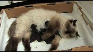 Mischa's Newborn Kittens: Birth & Development