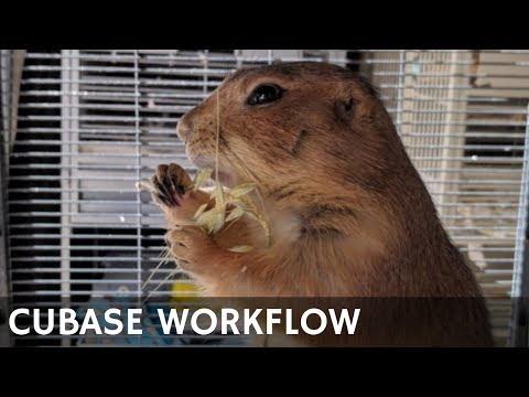 AA02 Cubase Workflow