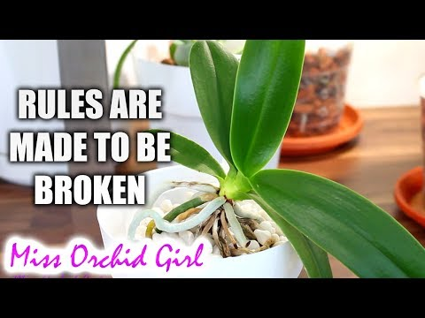 5 Orchid care rules you can break & how!