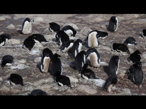 euronews science - Drug resistant bacteria found in Antarctic