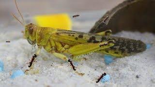 Ameisen und deren Vorbereitung auf die Winterruhe - Jumanji TM