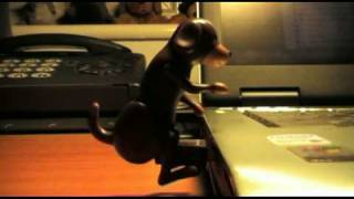 USB Humping Dog.Your computer's best friend.